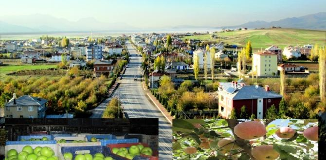 YALIHÜYÜK'TE ELMA  REKOLTESİ 200 TON