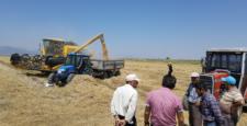 Suğla'da hasat başladı