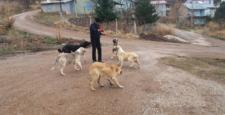 Gölcük Yaylasının bekçi köpeklerine belediyeden yiyecek yardımı