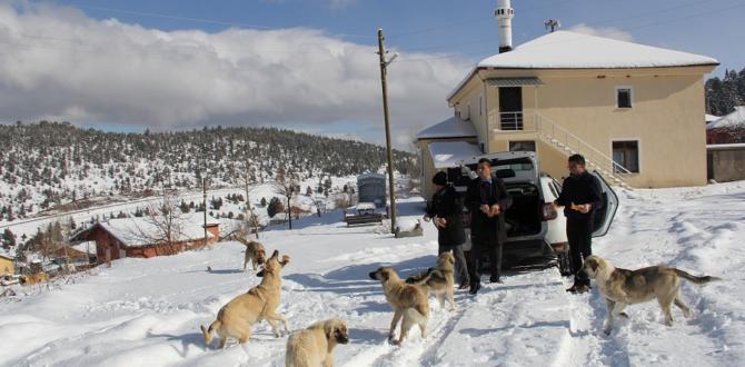 Gönüllü ekip  yayladaki  köpeklere yiyecek götürdü