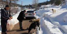 Başkan Koçer'den köpek katliamına tepki