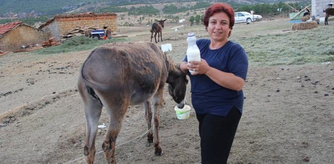 Eşinin kanser tedavisi için eşek çiftliği kurdu