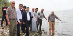 Suğla Gölüne 20 bin sazan yavrusu (VİDEO HABER)