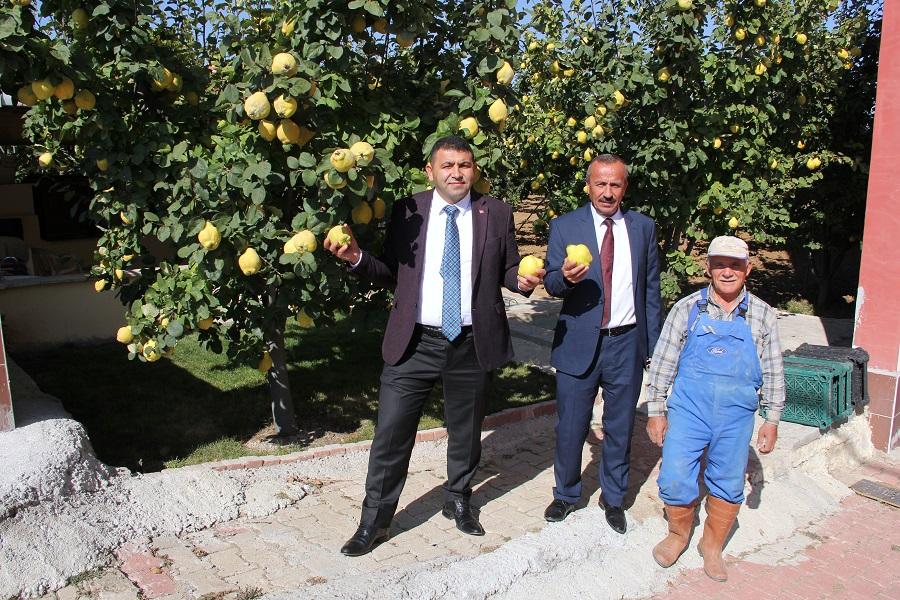 Yalıhüyük aşağı mahallede Evinin yanındaki 4 dekarlık tarlaya 125 adet ayva ağacı eken ve ürettiği ürünleri İstanbul'a götürerek pazarlayan Hasan Uçmaz örnek bir çiftçilik örneği sergiliyor.